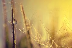 Fresh grass with dew drops and spider web at sunrise. Nature Background
