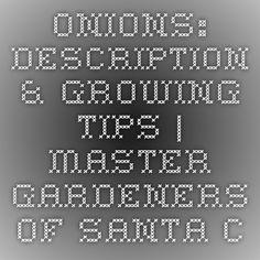Onions: Description & Growing Tips | Master Gardeners of Santa Clara County