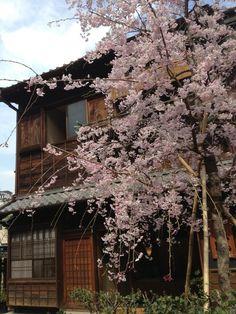 #Japan traditional folk house #Tokyo #sakura