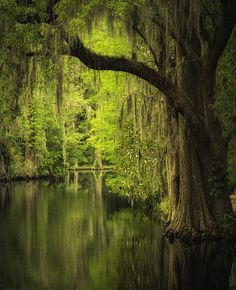 Magnolia Gardens - Charleston, South Carolina