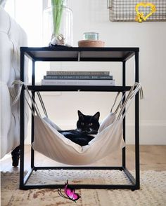 <br> Cute Kittens, Cats And Kittens, Kitty Cats, Funny Animal Memes, Funny Animals, Cute Animals, Diy Cat Hammock, Cat House Plans, Cutest Animals On Earth