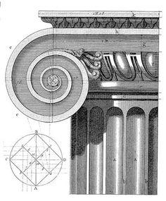 Ионическая волюта, бронзовый циркуль и раковина телескопиум / Чертежи архитектурных памятников, сооружений и объектов - наглядная история архитектуры и стилей