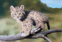 Baby Animals Super Cute, Cute Baby Cats, Cute Babies, Cute Animals, Snowshoe Cat, Baby Animals Pictures, Bird Artwork, Unique Cats, Pastel Drawing