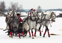 Russian Orlov Trotter in traditional troika sleigh harness, I saw a set of these in Ohio when I was in grade school on a field trip.
