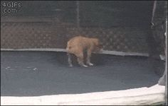 This pooch who just wants to flip and have fun.