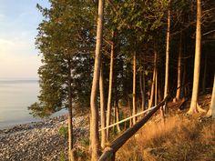 Cedars on Washington Island