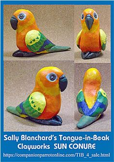 24 Best Sun Conures images in 2016 | Parrots, Beautiful birds, Conure