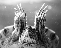 Love this photo, used to have a red ear slider. Best to take pictures of!