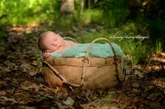 outdoor woods newborn posed. newborn photography