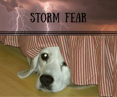 Why+Are+Dogs+Afraid+of+Thunder?