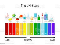 pH scale. Universal Indicator pH. Test Strips pH scale. Universal Indicator pH. Test Strips use for Track and Monitor pH for Alkaline and Acid levels. Color vector diagram for educational, medical, science use pH value stock vector Medical Science, Color Vector, Magazine Articles, Team Names, Free Vector Art, Photo Illustration, Image Now, Textbook, Royalty Free Images