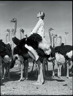 Wenda with ostriches, 1951 | NormanParkinson