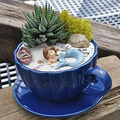 14 Cute Teacup Mini Gardens Ideas is part of Mini garden Ideas - Teacup Mini Gardens Ideas to create your own Mini Fairy Terrarium Gardens with these miniature terrarium gardens, small water gardens, or combine the both Small Water Gardens, Fairy Terrarium, Succulent Terrarium, Terrarium Wedding, Succulent Ideas, Mini Fairy Garden, Fairy Gardening, Gardening Tips, Organic Gardening
