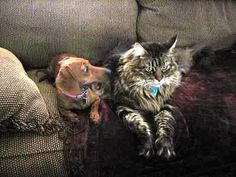 Rosie and her friend the cat, she apparently learned some shocking news from the Cat that day.