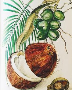 Retro coconut print love   #spicemama #retro #coconut #illustration #art #design #beautiful #food #onmytable #book #vintagebooks #flashesofdelight #thatsdarling #jungalowstyle Fractionated Coconut Oil, Health Center, Watercolor And Ink, Vintage Books, Urban Art, Decoration, Textile Design, Pencil Drawings, Watercolors