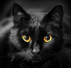 Beautiful black!