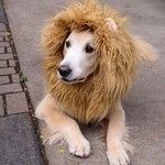 Fantasia para o seu dog pular o Carnaval!!!