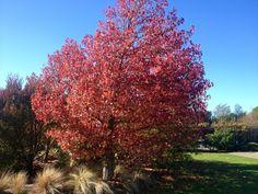 Autumn leaves at Vintners Retreat, Marlborough