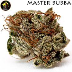 Master Bubba at #CC101 on our Top Shelf. #sacramento #420