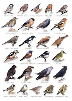 bird chart You are in the right place about wild Birds Here we offer you the most beautiful pictures about the colorful Birds you are looking for. When you examine the bird chart part of the picture y Pretty Birds, Love Birds, Beautiful Birds, Birds 2, Glass Birds, Small Birds, Beautiful Pictures, Beautiful Places, Animals And Pets