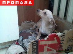 Пропала собака карликовый пинчер г.Подольск http://poiskzoo.ru/board/read26521.html  POISKZOO.RU/26521 .. г Вечером пошла гулять и не вернулась домой. Возможно испугалась грозы.   РЕПОСТ! @POISKZOO2 #POISKZOO.RU #Пропала #собака #Пропала_собака #ПропалаСобака #Подольск