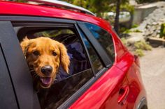 Travelling with pets: how to make sure your furry friends stay safe Animal Articles, Pet News, Pet Travel, Stay Safe, Funny Animals, Stock Photos, Pets, Safety Tips, News Stories