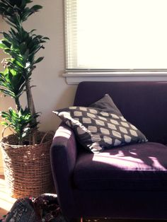 Purple Couch, Brown Walls.