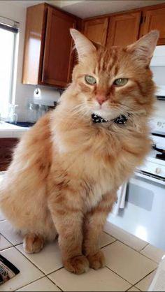 LOST CAT: 09/24/2017 - Temecula, California, CA, United States. Ref#: L37166 - #CritterAlert #LostPet #LostCat #MissingCat