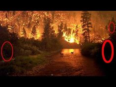 Fire fighters watch Bigfoots flee from forest blaze 2015 - BCS