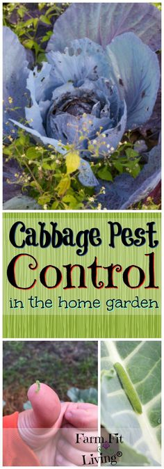 Garden Pest Control entails the regulation and control of pests, which is a type of species that are damaging to plants. Garden pests diminish the quality and Slugs In Garden, Garden Pests, Garden Tools, Garden Insects, Organic Gardening, Gardening Tips, Vegetable Gardening, Sustainable Gardening, Greenhouse Gardening