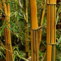 ornamental bamboo fence.htm 41 best bamboo privacy fencing images bamboo privacy fence  41 best bamboo privacy fencing images