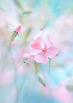 Find images and videos about pink, flowers and pastel on We Heart It - the app to get lost in what you love. Pastel Flowers, Beautiful Flowers, Colorful Roses, Flowers Nature, Soft Colors, Colours, Pastel Colors, Jolie Photo, Pretty Pastel