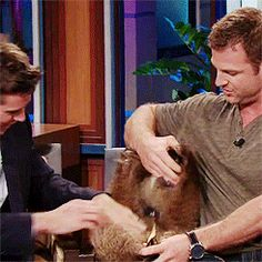 Gif* Armie Hammer with a baby grizzly bear on the Tonight Show, doing what anyone would LOVE to do ♥