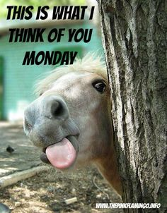 Monday Monday go away  #monday #horses #funny