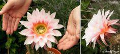 cultivo-y-floracion-de-cactus-y-suculentas-05