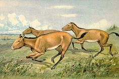 Are You Familiar With These 10 Prehistoric Horses?: Hipparion (10 Million Years Ago)