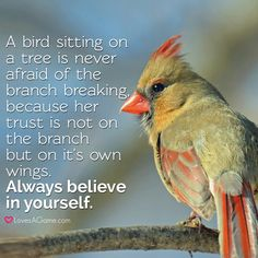 """A bird sitting on a tree is never afraid of the branch breaking, because her trust is not on the branch but on it's own wings. Always believe in yourself."""