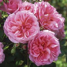 exquisite flowers austin
