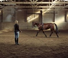 Basic Tips for How to Lunge Your Horse Effectively: Lunging can be a useful exercise, if done correctly.