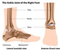 foot anatomy, foot injuries, anatomy of feet, ankle injuries, ankle anatomy Ankle Anatomy, Foot Anatomy, Hand Massage, Self Massage, Bone And Joint Clinic, Ankle Exercises, Ankle Joint, Hip Problems, Massage Benefits
