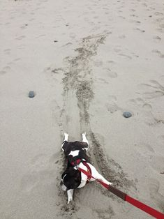 You'll have to drag me off this beach.  I'm not budging!    My vacation can't be over yet.  It just can't!