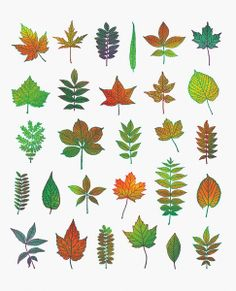 Autumn print by Scott Campbell