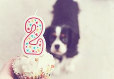 Easy peasy pupcake recipe for your dog's birthday! Frosting and all! Our dogs loved them!