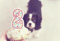 celebrate dogs birthday
