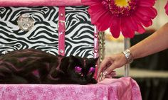 A cat wearing hot pink false lashes... and probably about to bite off her owner's French tips. (Photo by Dustin Fenstermacher.)