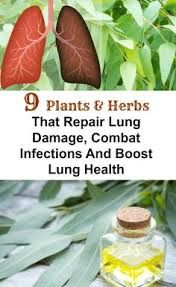 9 Plants & Herbs That Repair Lung Damage, Combat Infections And Boost Lung Health - Healthy Tricks And Recipes Holistic Remedies, Natural Health Remedies, Herbal Remedies, Cold Remedies, Natural Cures, Health And Nutrition, Health Tips, Health And Wellness, Health Care