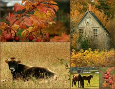 A beautiful collage. Photos from Prince Edward Island, Canada Country Life, Country Girls, Country Living, Country Roads, Quebec Montreal, Autumn Lights, Beautiful Collage, Back Road, Prince Edward Island
