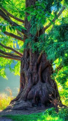 Picture of a century year old tree Desktop Background Pictures, Studio Background Images, Light Background Images, Photo Backgrounds, Digital Backgrounds, Blur Background Photography, Blur Photo Background, Picsart Background, Belle Photo