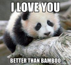 panda memes - Google Search