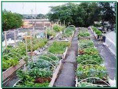 Roof top garden - vegetable and herbs on hand
